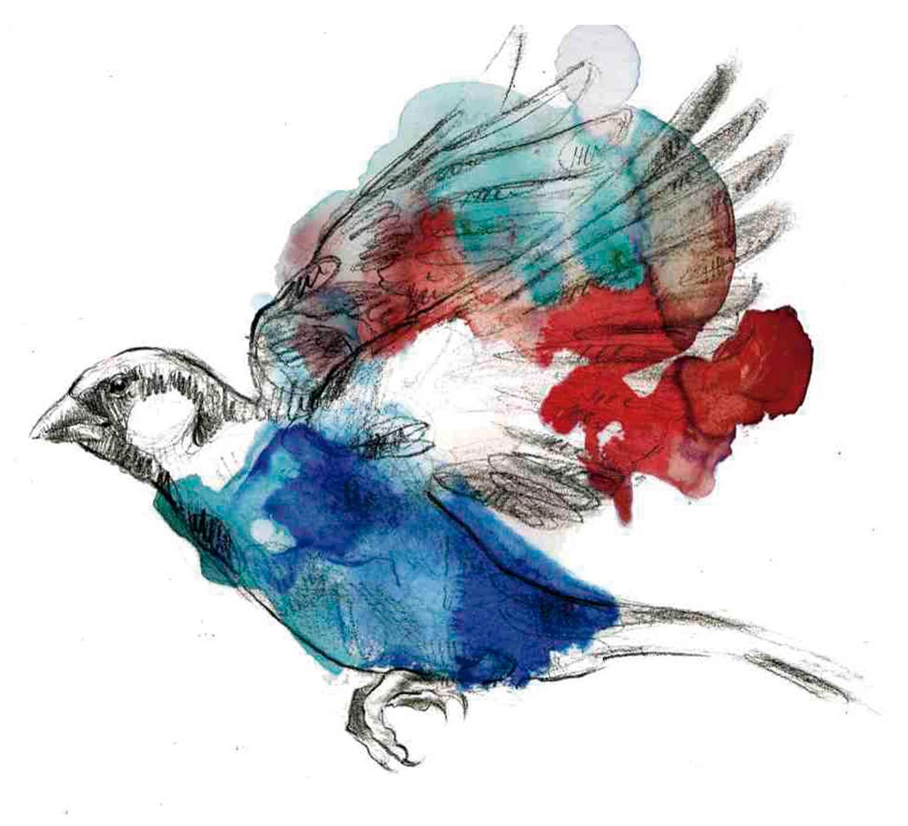 pajaro-azul-rojo